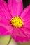 Stock Image : Pink