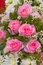 Stock Image : Pink fabric roses