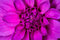 Stock Image : Pink flower