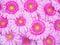 Stock Image : Pink Gerber flowers