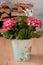 Stock Image : Pink hortensia in bucket