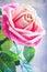 Stock Image : Pink rose