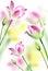 Stock Image : Pink tulips on white background