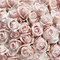 Stock Image : Pink vintage roses