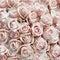 Stock Image : Pink vintage roses