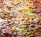 Stock Image : Pizza texture
