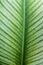 Stock Image : Plant leaf