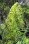 Stock Image :  Planta en un jardín