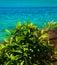 Stock Image : Plants and sea