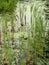 Stock Image : Pond flora