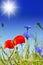 Stock Image : Poppies And Cornflower