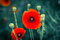 Stock Image : Poppies.