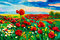 Stock Image : Poppy fields