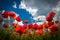 Stock Image : Poppy flowers in the sky