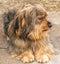 Stock Image : Portrait of a beautiful dog