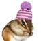 Stock Image : Portrait de tamia drôle avec le chapeau sur le blanc