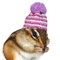 Stock Image : Portrait of funny chipmunk with hat on white