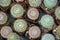 Stock Image : Pots of little cactus plants