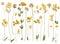 Stock Image : Pressed wild flowers