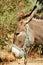 Stock Image : Profile of a donkey in a Sicilian farm