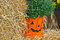 Stock Image : Pumpkin basket with mum