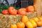 Stock Image : Pumpkin farm