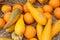 Stock Image : Pumpkins (Cucurbita moschata) picked
