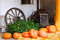 Stock Image : Pumpkins next to plant and old wagon wheel