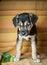 Stock Image : Puppy