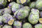 Stock Image : Purple brussel sprouts background