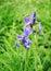 Stock Image : Purple Flower