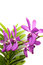 Stock Image : Purple Orchid On White Background