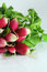 Stock Image : Radishes on a white background
