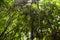 Stock Image : Rainforest background
