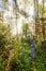 Stock Image : Rainforest travel