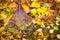 Stock Image : Rake and leafs