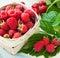 Stock Image : Raspberries