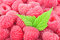 Stock Image : Raspberry with leaves