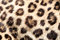 Stock Image : Real Live Leopard Fur Skin Texture Background