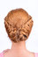 Stock Image : Rear view of coiffure from pigtails