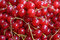 Stock Image : Red currant berry