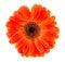 Stock Image : Red gerbera