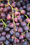Stock Image : Red Grapes