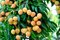 Stock Image : Red litchi fruits at tree