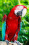 Stock Image : Red macaw on the wood log