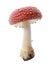Stock Image : Red mushroom