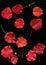 Stock Image : Red Prunus leaves in  autumn