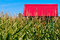 Stock Image : Red Roof in a Corn Field