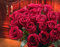 Stock Image : Red roses bouquet