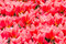 Stock Image : Red Spring Background